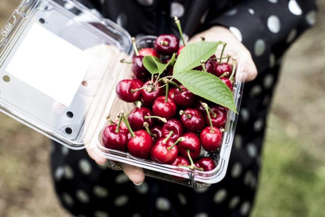 cherry picking-23